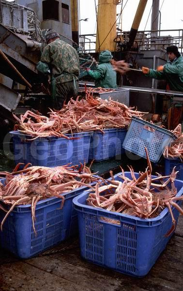 сахалин рыболовные компании креветка