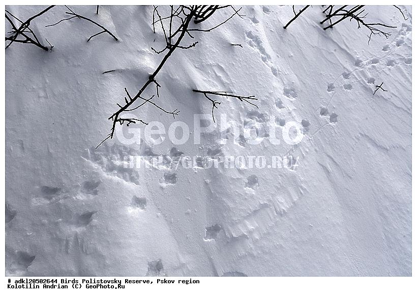 Иллюстрации следов зимующих птиц на снегу картинки