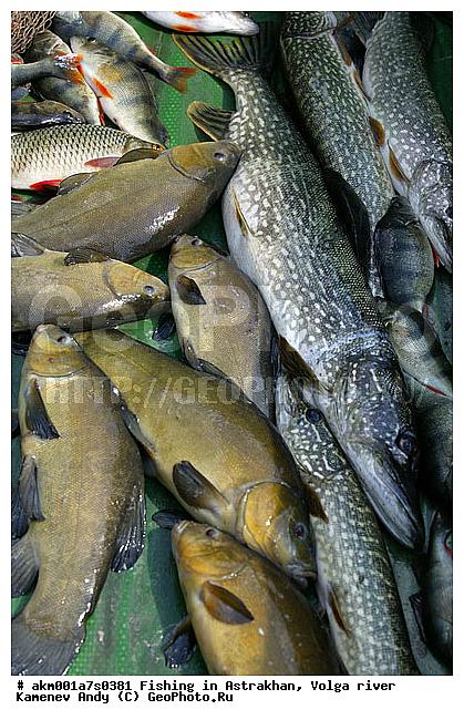 рыбалка в астрахани какая рыба водится