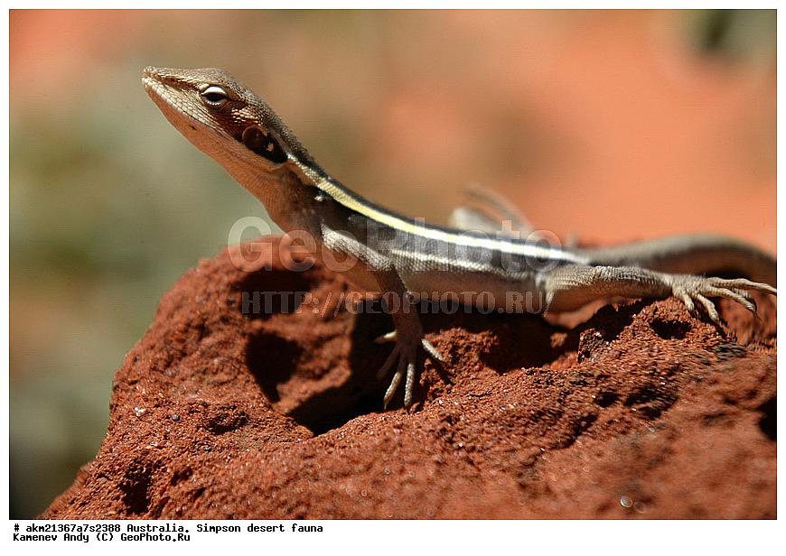 даний час животные в тропической пустыне австралии мнеОставьте