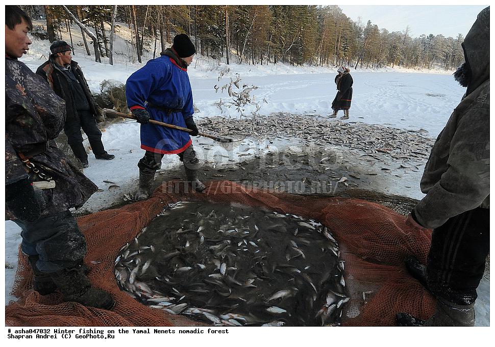 Рыбалка в ямало ненецком округе