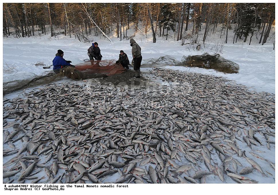 рыбалка в тундре коми
