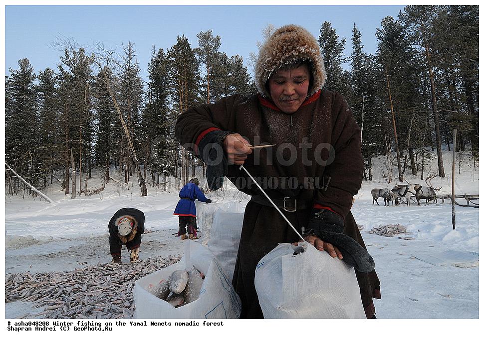 охота и рыбалка у ненцев