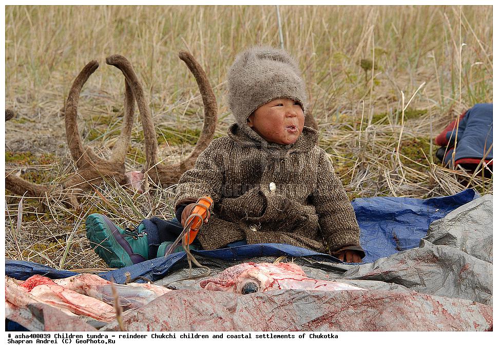 картинки для детей тундра