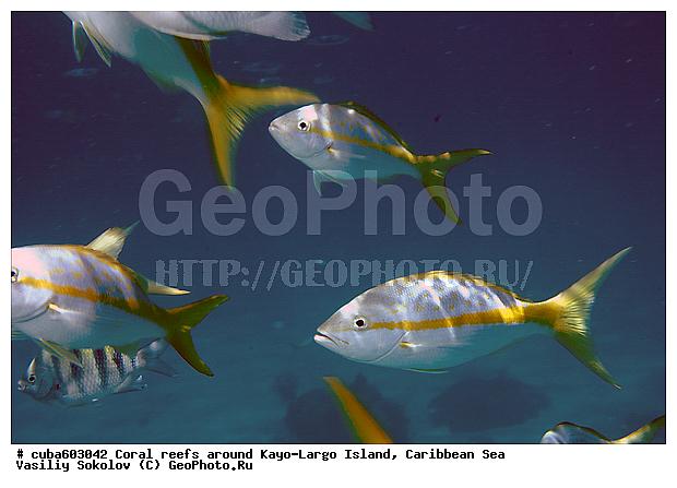 Рыбы обитающие у коралловых рифов о