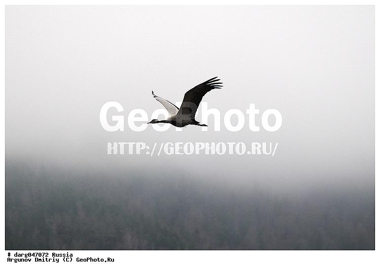 Птица птицы республика алтай туман