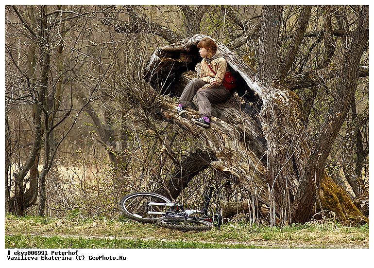 Фотография Девушка на дереве, Петергоф | Фотобанк ГеоФото/GeoPhoto ...