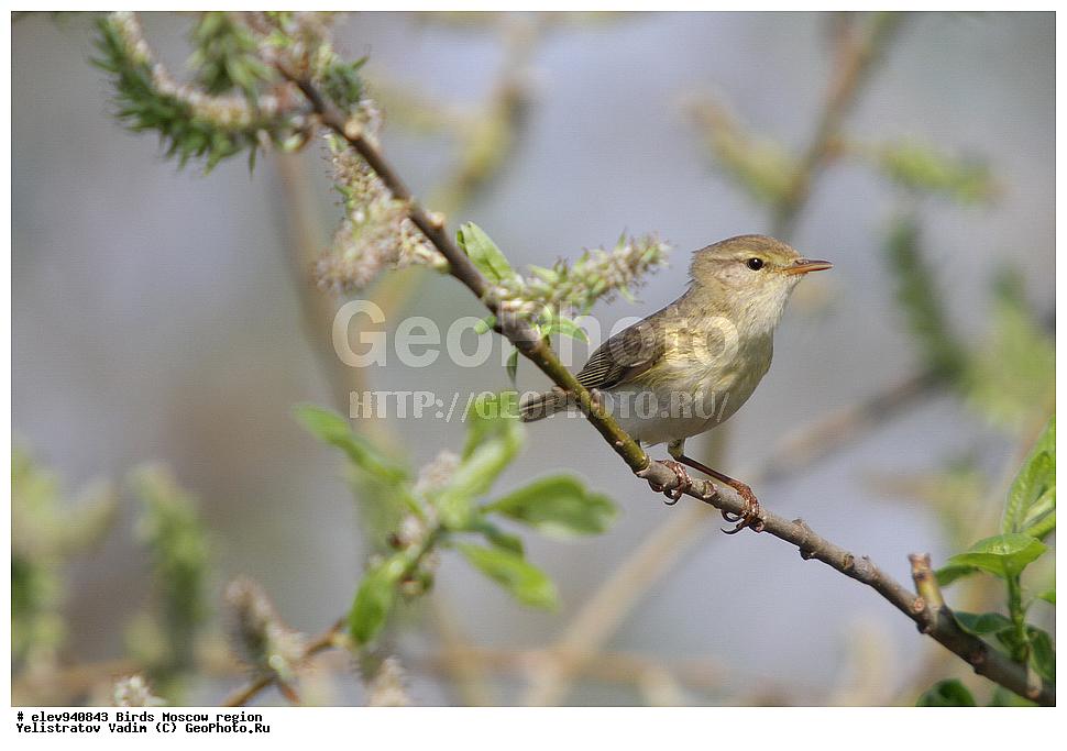 птицы в московской области