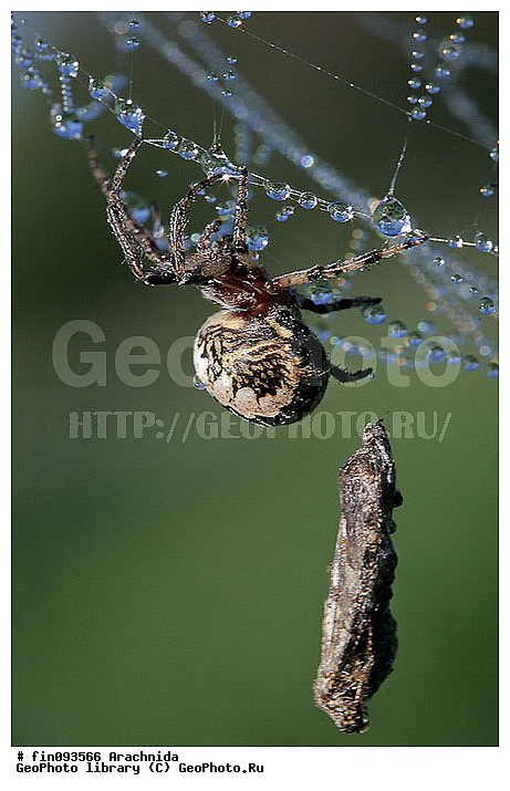 как паук ловит бабочку