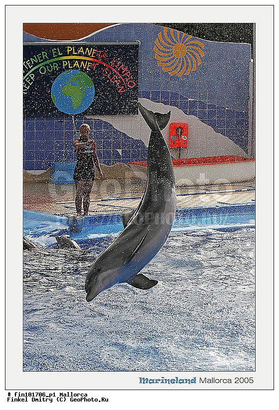 Новости Бренды список дельфинариев в россии материал почти