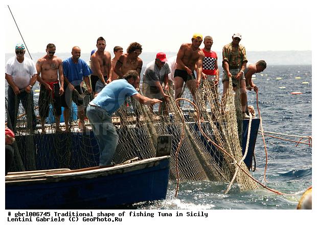смотреть видео как ловят тунца