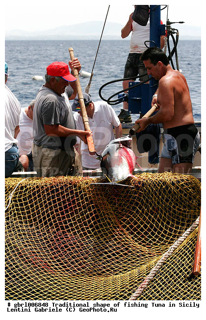 ловля тунца на сицилии