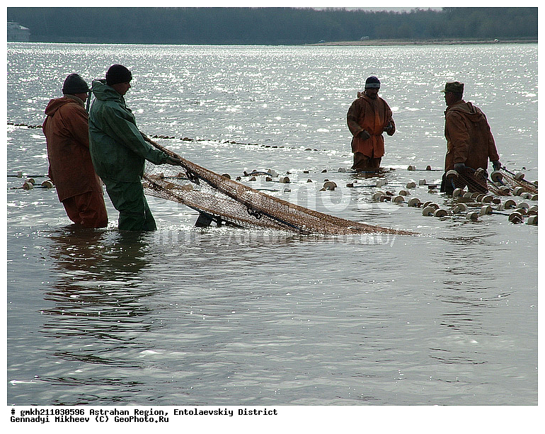рыбаки тянут сети