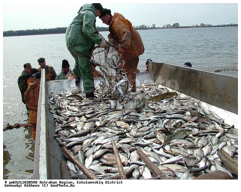 астрахань рыболовным промыслом