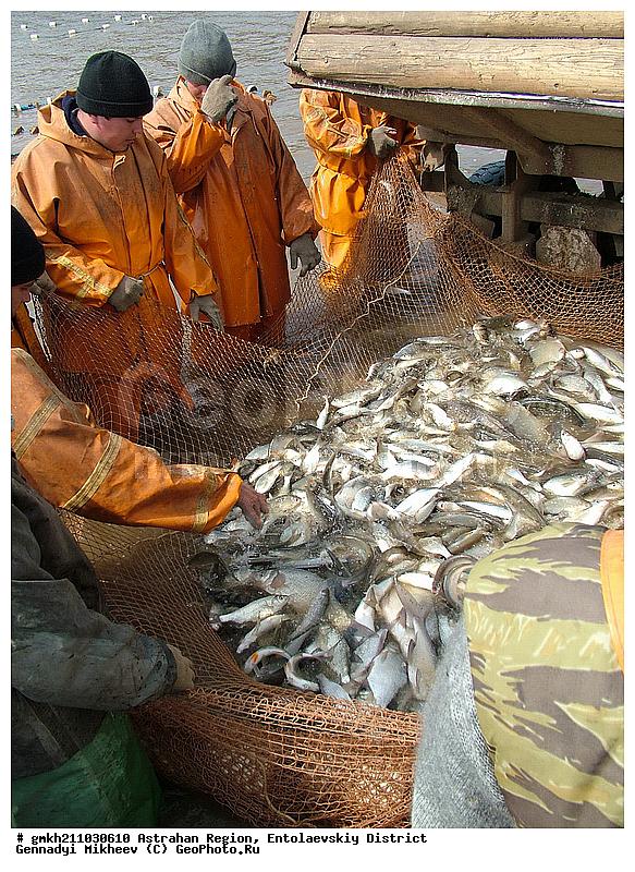 грач рыбак