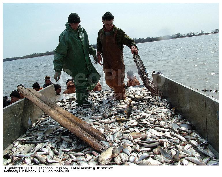 рыбалка в астраханской обл поселок михайловка