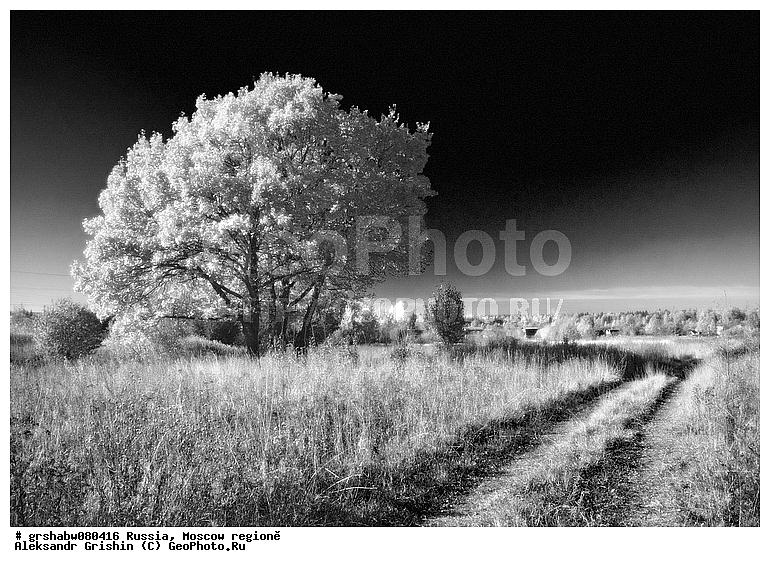 Среднерусский пейзаж, Подмосковье.  Одинокое дерево в поле и сельская дорога.