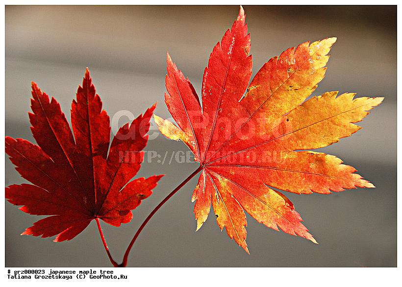 Как листья ромашки рисунок