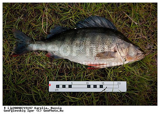 рыбалка в муезерском районе видео