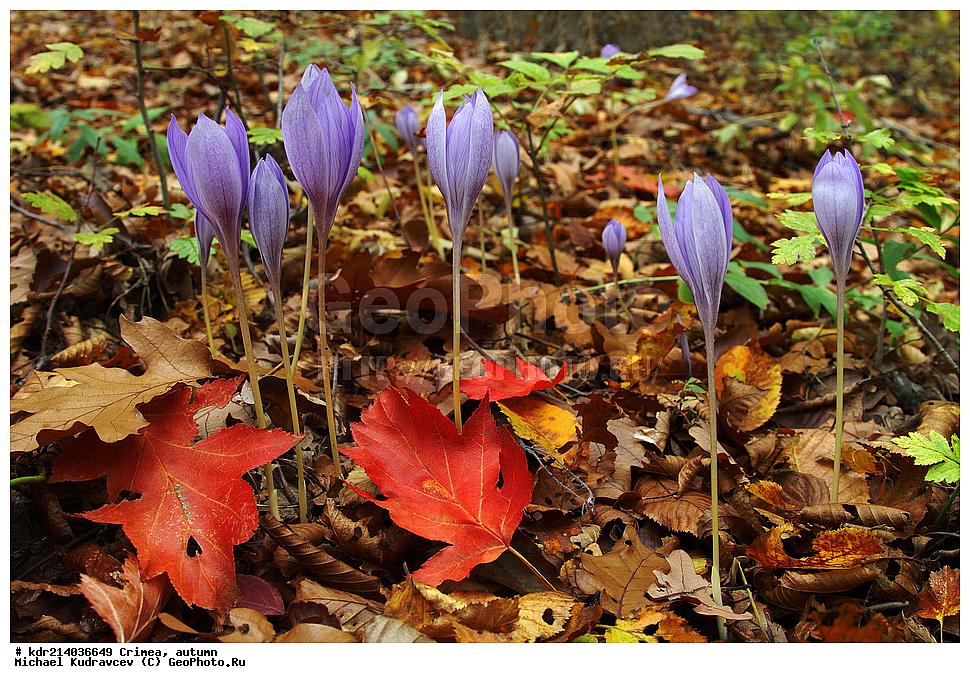 Букет ромашек горные цветы в крыму