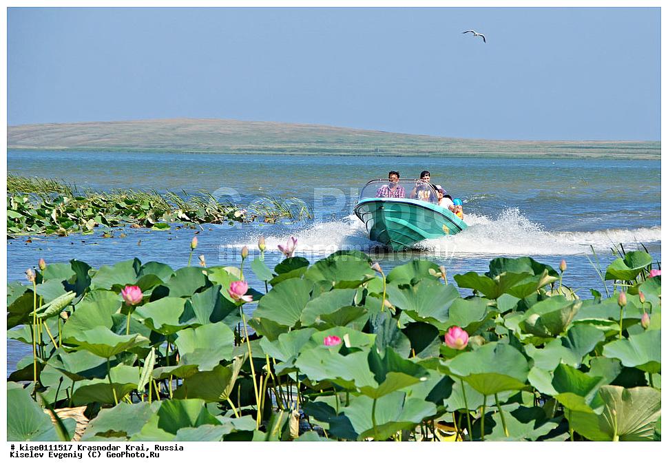 Азовское море лотосы