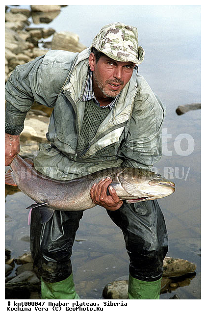 Таймень пойманный на реке котуйкан