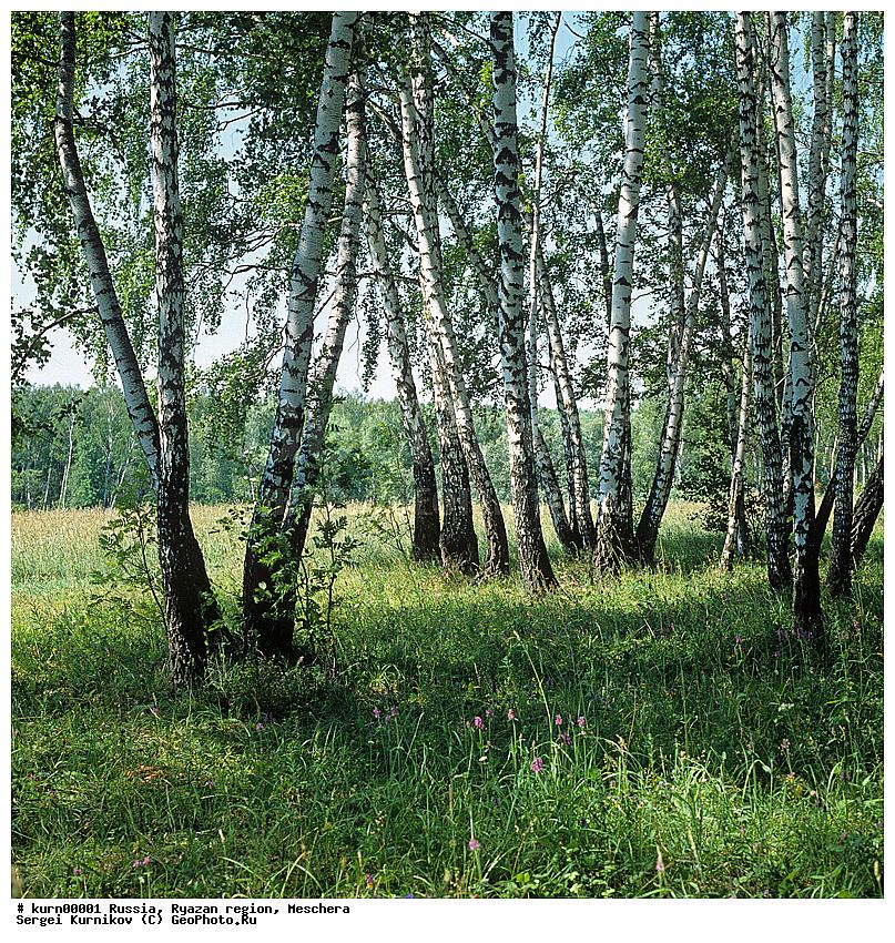 Средняя полоса россии ствол трава