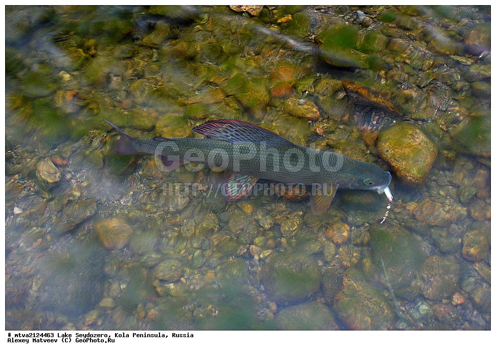 ловозеро на кольском рыбалка