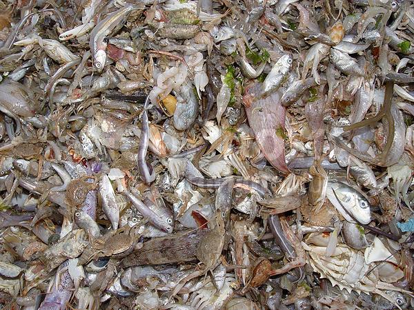 на что ловить рыбу во вьетнаме