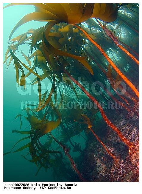 Подводный подводный мир подводный