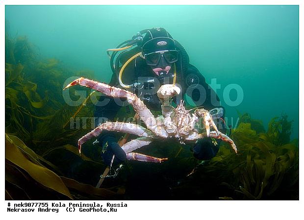 Подводный мир бареццево море