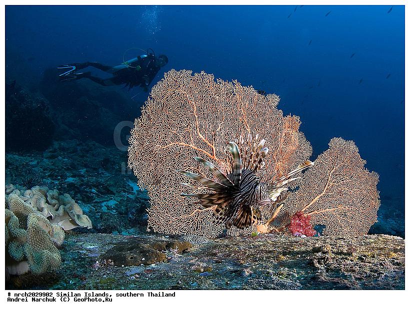 Тайланд море подводный мир тропики