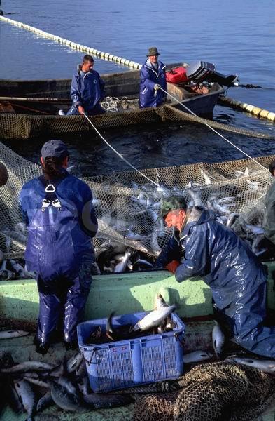 ловля рыбы на сахалине