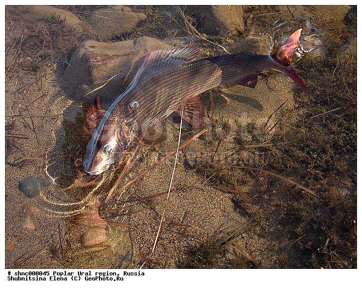 рыбная ловля для катаклизм