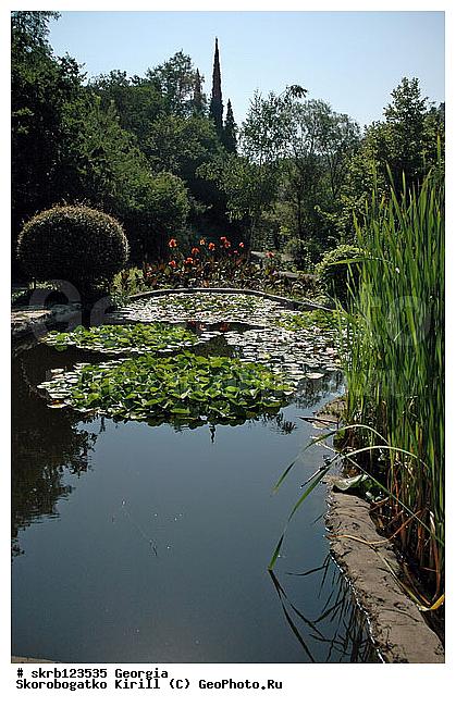 Ботанический грузия снг тбилиси сад