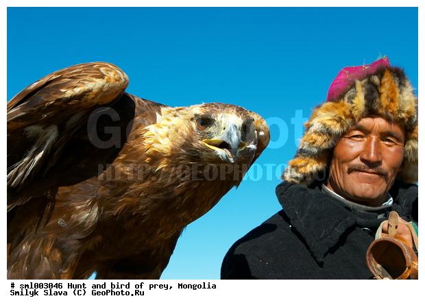 Монгольская охота с орлом За хорошего орла
