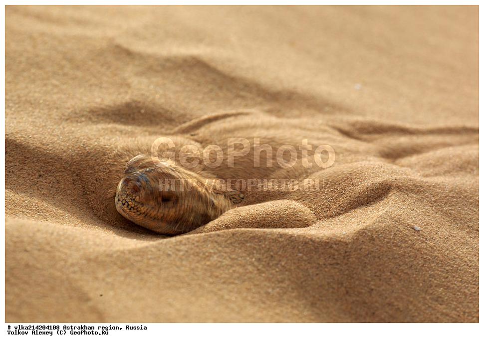 Змея прячится в песок сне во раненая доме в
