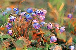 Цветы и разнотравье