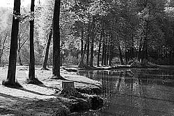 Черно белый пейзаж с парком в усадьбе