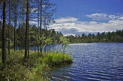 Карелия пейзаж с озером