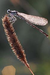 насекомые владимирской области фото