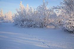 Картинки ненецкий автономный округ природа зимой