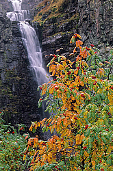 Waterfall Njupeskaer and Rowan Ash, Sorbus aucuparia - Schweden
