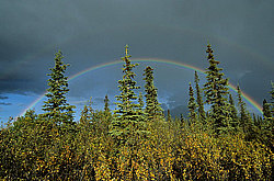 Rainbows over tundra, Denali National Park