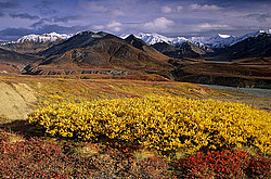 Alaska Range and tundra, Denali National Park