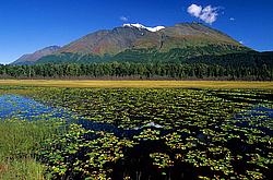 Mountain and Water lily