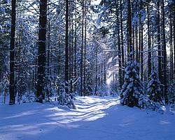 Зимний заснеженный лес февраль